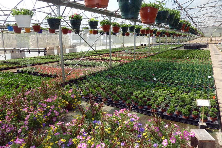 Jardinerie hortisyl cahors fleuriste jardinerie fleurs for Jardinerie internet